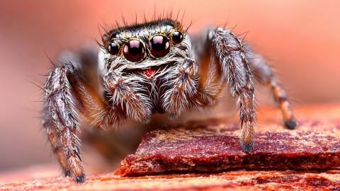 Smiling Spiders Web Design