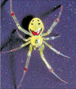smiling spider - image two