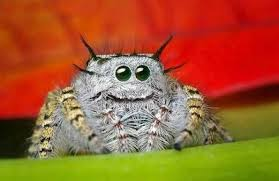 smiling spiders-pic one